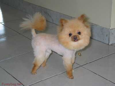 doghaircut_1